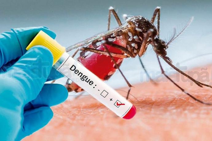 Resultado de imagem para casos de dengue