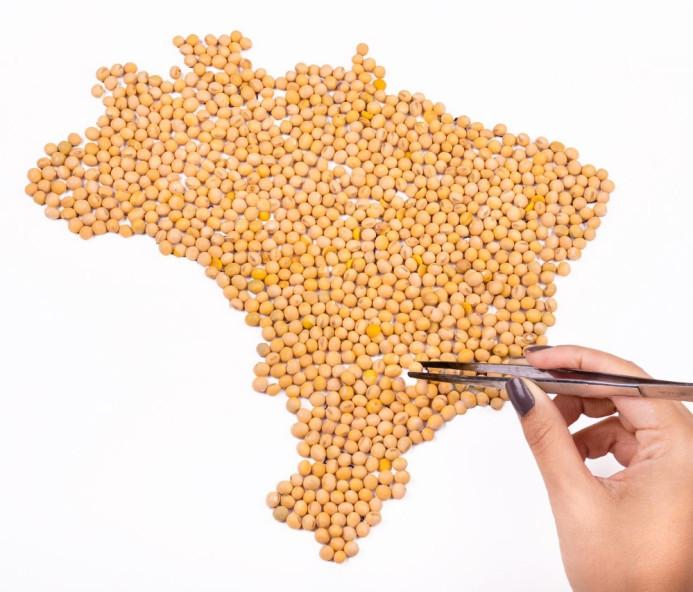 Soja cresce 80% nos últimos seis anos no Oeste Paulista