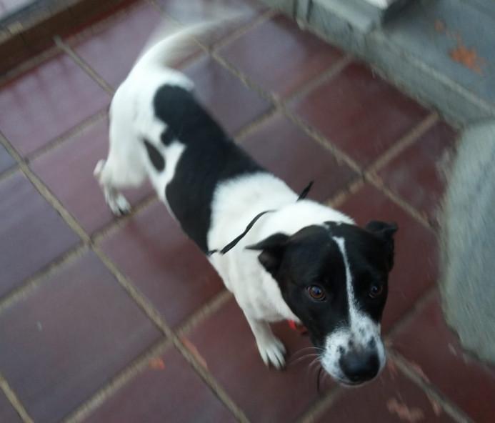 Procura-se dono de cachorra que apareceu na Avenida Tiradentes